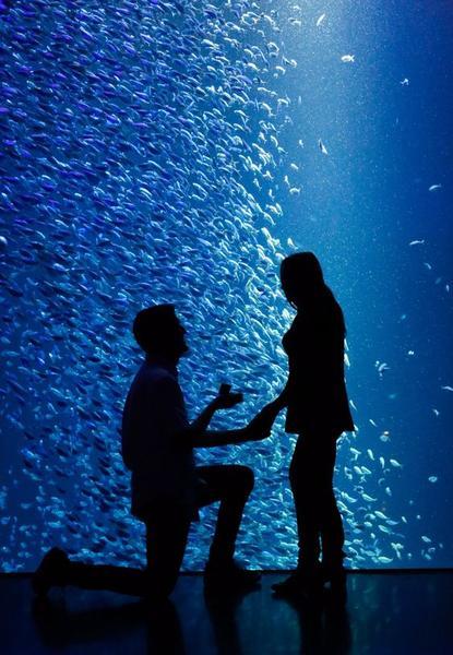 Aquarium proposal